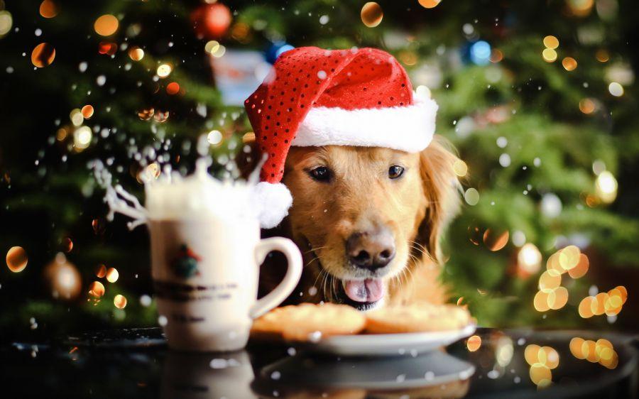 Самый точный гороскоп на 2018 год Желтой Земляной Собаки для всех знаков зодиака