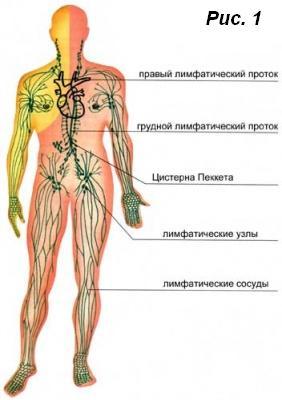 Нарушения лимфосистемы. Лечение, очистка и профилактика
