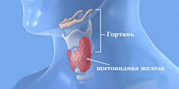 Витамины и микроэлементы для щитовидной железы