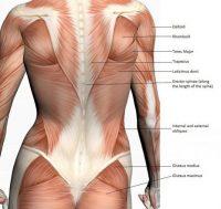 Золотая подборка полезных упражнений при варикозе, геморрое, диастазе и не только