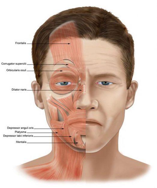 Что означают морщины на лице