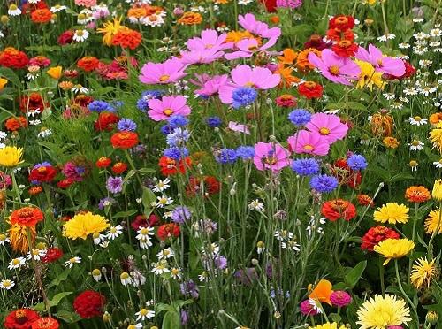 Энергетика летних цветов: какой букет поставить в вазу, чтобы привлечь благополучие