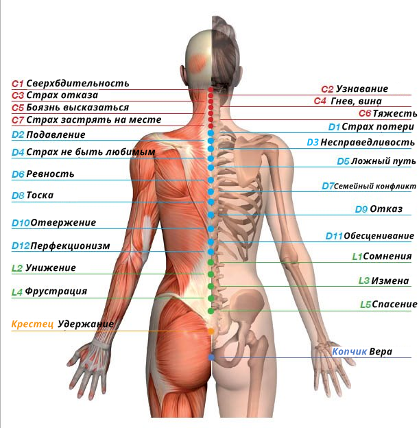 Все болезни — от подавления эмоций Вот примеры на конкретных внутренних органах