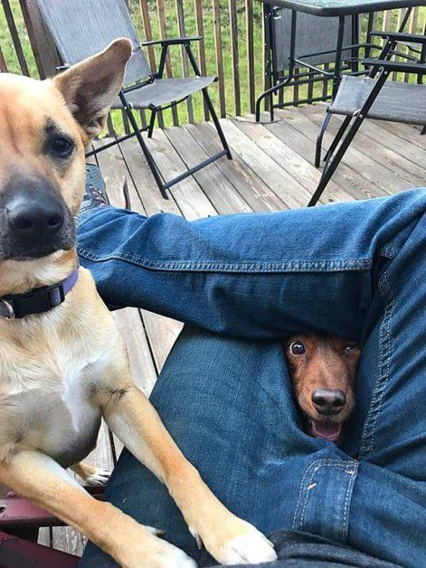22 фото с собаками, когда просто невозможно отказать, если они смотрят на еду.