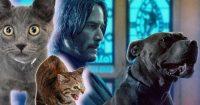 Марокканские кошки принесли хаос на съемочную площадку фильма «Джон Уик 3»