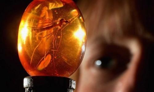Сэм Нил сравнивает задержку проекта «Мир Юрского периода 3» с насекомыми, попавшими в янтарь